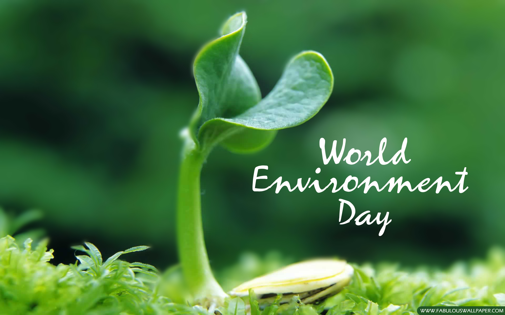 World Environment Day – Raise your voice not the sea level
